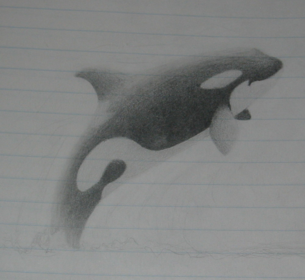 Orca Jumping Drawing Policy Privacy Orca Jumping Drawing